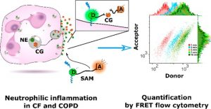 Cathepsin G Activity as a New Marker for Detecting Airway Inflammation by Microscopy and Flow Cytometry.
